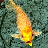 福彩3D【类型】预测专家:黄金鱼