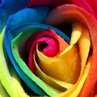 福彩3D【类型】预测专家:玫瑰