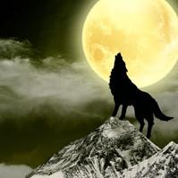 福彩3D【直选精选】预测专家:南方的狼