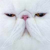 福彩3D【杀一码】预测专家:赤脚的猫