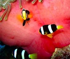 福彩3D【定位胆码】预测专家:珊瑚